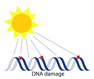 DNA damage